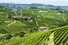 Langhe, vineyards Royalty Free Stock Photos