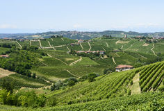 Langhe, vineyards Stock Image