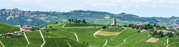 Langhe, vineyards Royalty Free Stock Photography
