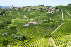 Langhe, vineyards. Langhe (Asti, Cuneo, Piedmont, Italy) - Landscape at summer with vineyards royalty free stock images