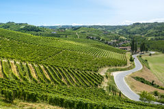 Langhe, vineyards. Langhe (Asti, Cuneo, Piedmont, Italy) - Landscape at summer with vineyards stock images