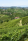 Langhe, vineyards Royalty Free Stock Photo