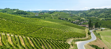 Langhe, vineyards. Langhe (Asti, Cuneo, Piedmont, Italy) - Landscape at summer with vineyards royalty free stock photos