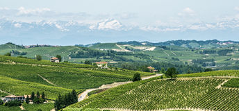 Langhe, vineyards. Langhe (Asti, Cuneo, Piedmont, Italy) - Landscape at summer with vineyards royalty free stock image