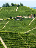 Langhe, vineyards Stock Photography