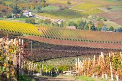 Langhe vineyards landscape in Italy Royalty Free Stock Photo