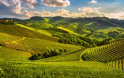 Langhe vineyards sunset panorama, Serralunga Alba, Piedmont, Ita Royalty Free Stock Photo