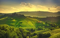 Langhe vineyards view, Castiglione Falletto and La Morra, Piedmont, Italy Europe royalty free stock image