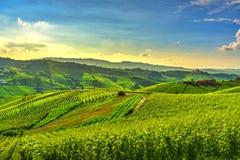 Langhe vineyards view, Castiglione Falletto and La Morra, Piedmont, Italy Europe stock photo