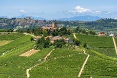 Langhe vingårdar på sommar arkivfoton