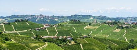 Langhe vingårdar Arkivfoto