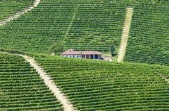 Langhe, wijngaarden Stock Foto's