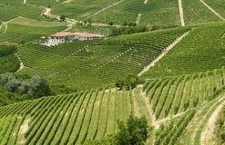 Langhe, wijngaarden Royalty-vrije Stock Foto