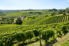 Langhe, winnicy Obrazy Royalty Free