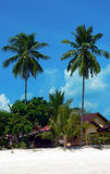 Langkawi Island. Tall Twin Palms. Langkawi, Malaysia. Tall Twin Palms royalty free stock image