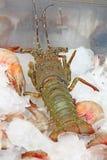 Langosta con el camarón en el hielo Restaurante en la India Foto de archivo libre de regalías