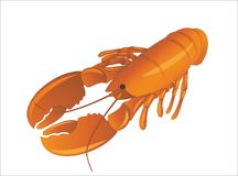 Langosta o cangrejos rojos en el fondo blanco Fotos de archivo
