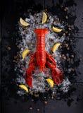langosta roja fresca Imagen de archivo