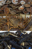 Langouste. Spiny lobster at the fish merchant Stock Photo