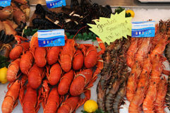 Langouste. Spiny lobster at the fish merchant in Normandy Royalty Free Stock Photos