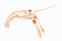 Langoustine ή έτοιμα γαρίδα θαλασσινά. Ακατέργαστα τρόφιμα. Στοκ Εικόνα