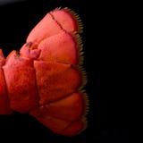 Langoustine Photos libres de droits