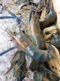 Langoustine Images libres de droits