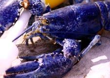 Langoustine bleue Photos stock
