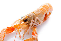 Langoustine de Norwey Photo libre de droits