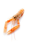 Langoustine de Norwey Images stock