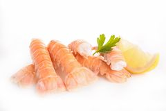 Langoustine Royalty Free Stock Photography