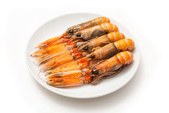 Langoustine  (Nephrops norvegicus) isolated on a white studio ba. Langoustine  (Nephrops norvegicus),Dublin Bay Prawn or Norway Lobster ioslated on a white Stock Photography
