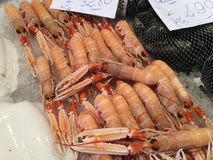 Langoustine no gelo foto de stock royalty free