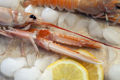 Langoustine or Norwegian Lobster Stock Photo