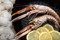 Langoustine or Norwegian Lobster. (Nephrops norvegicus). The muscular tail of Nephrops norvegicus is frequently eaten, and its meat is known as scampi Stock Image