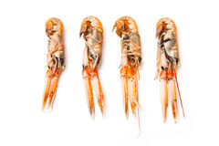 Langoustine ou homard de Norvège Photo stock
