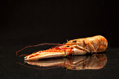 Langoustine on a plate Stock Image