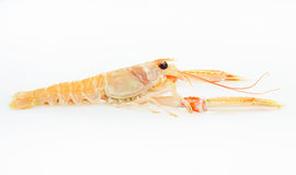 Langoustine or Prawn prepared seafood. Raw food. Stock Images