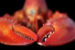 Langoustine rouge d'isolement sur le blanc Photographie stock