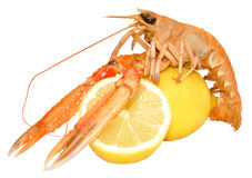 Langoustine Shellfish Stock Photography