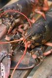 Langoustine sur le dock Images stock