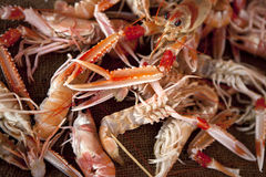 Langoustines. On a market stall Royalty Free Stock Photo