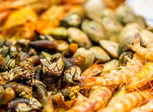 Langoustines, barnacles and other shells at seafood market Stock Photography