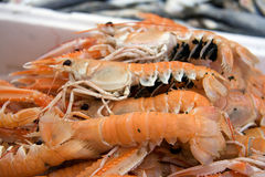 Langoustines with eggs. Fresh langoustines for sale at a market Royalty Free Stock Images