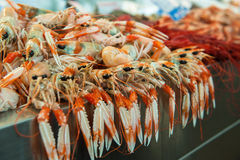 Langoustines at fish market Royalty Free Stock Images