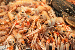 Langoustines at fish market Stock Image