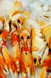 Langoustines Royalty Free Stock Images