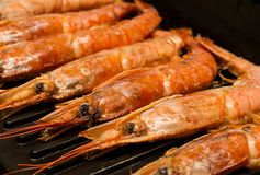 Langoustines group seafood cooking on the grill appetizing delicious lunch dinner stock image