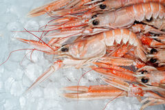 Langoustines on ice Stock Photography