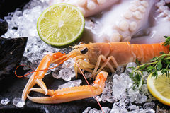 Langoustines and octopus on ice Royalty Free Stock Images